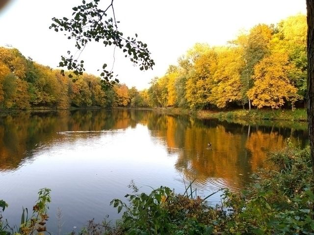 Городское озеро - nature, fall, colors - igenvoicov | ello