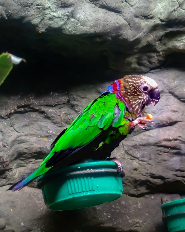 Teach parrot terms 'supply dema - carlos_a_morales | ello