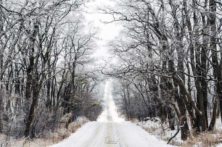 love winter! time create dramat - dianasimply | ello