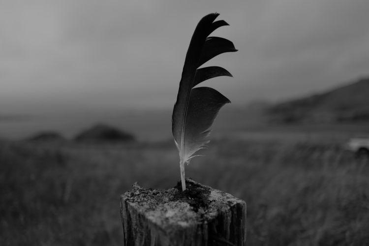 Feather Bone / Eagle Caribou - leica - ben-staley | ello
