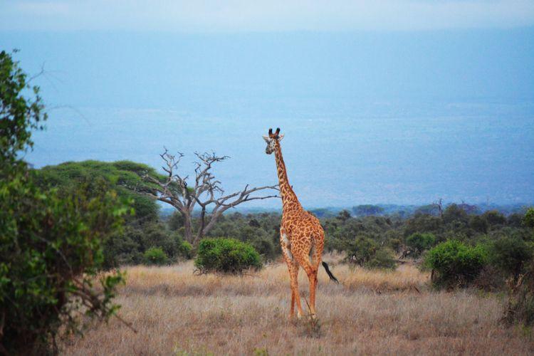 Serengeti evocative names. Call - tantourism   ello