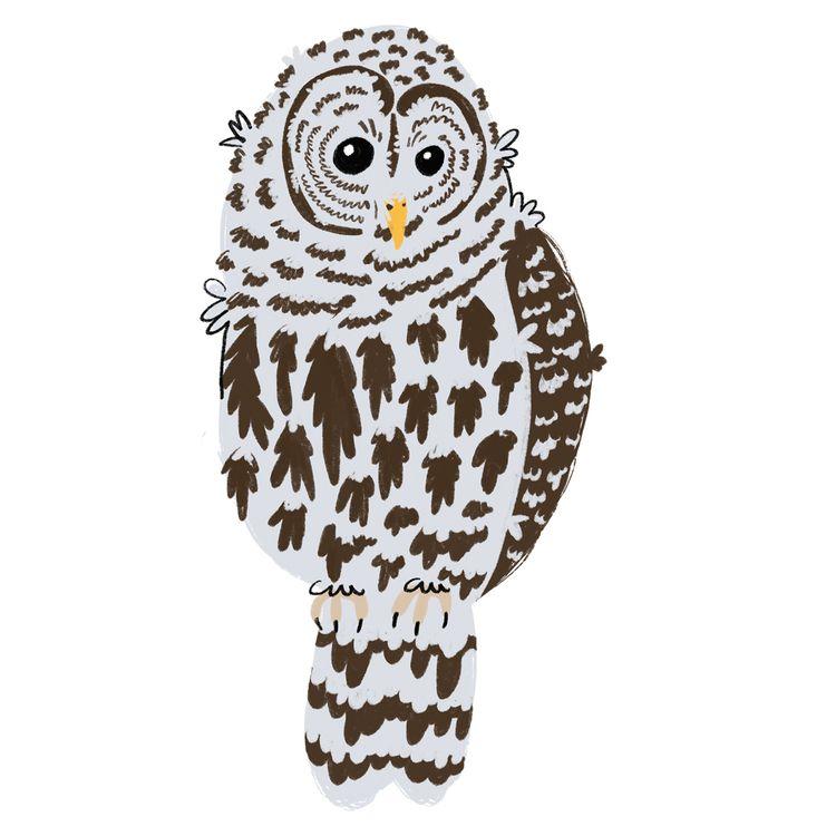 8 owls spend time Rhode Island - emilynettie   ello