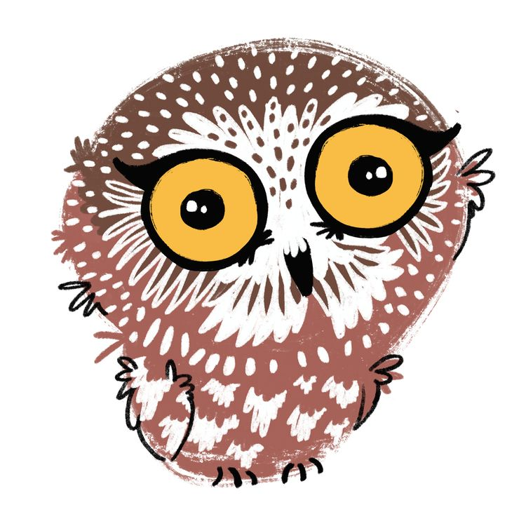 Northern owl (Aegolius acadicus - emilynettie | ello