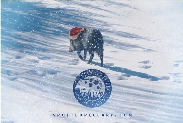 Spotted Peccary 2020 - 34th Yea - robinja56 | ello