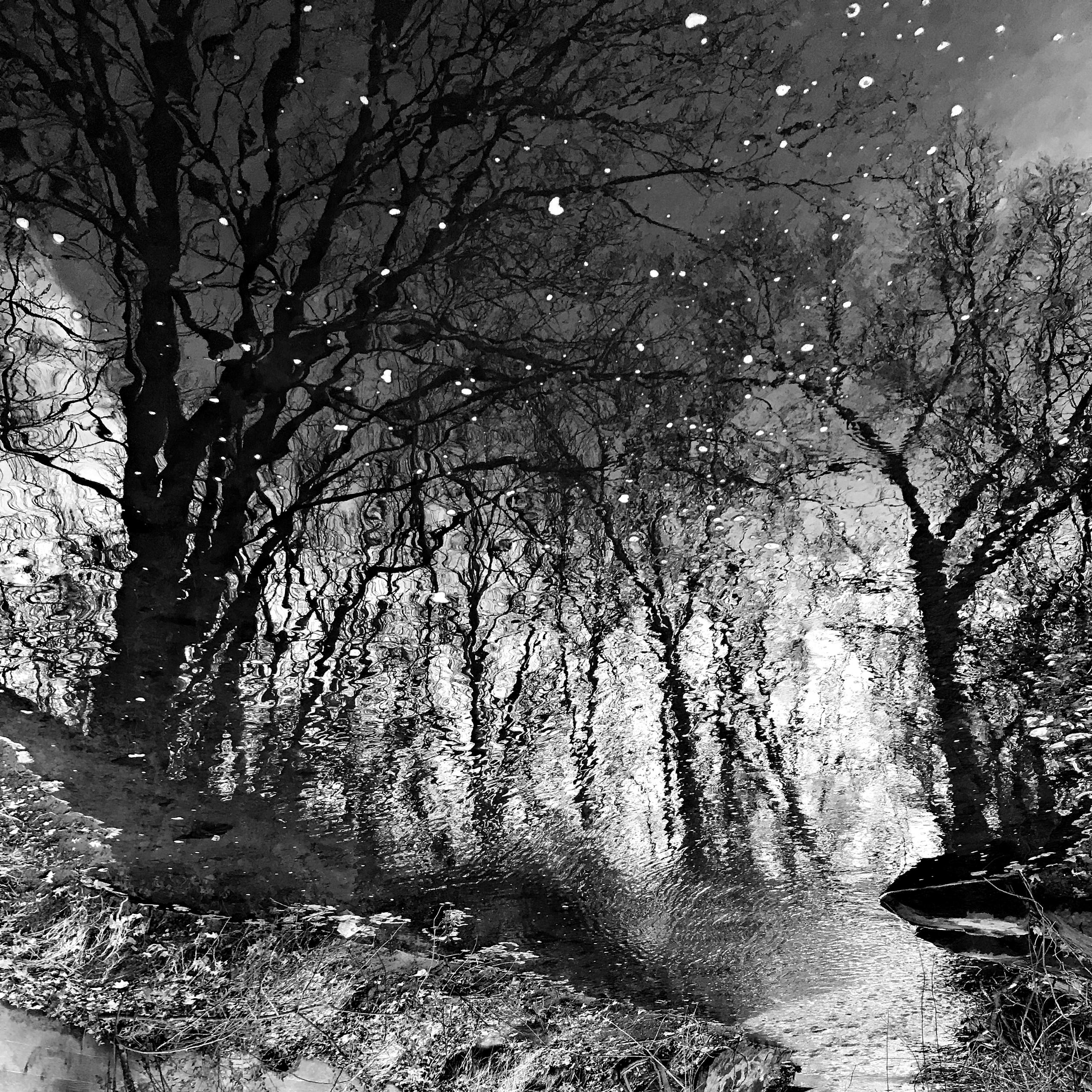 forest dark dreary - photography - kenlong   ello