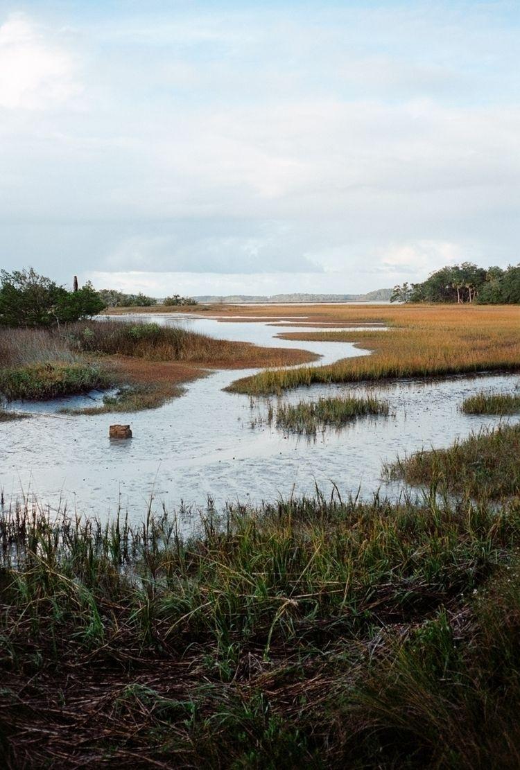Untitled (Pinckney Island South - colinczerwinski | ello