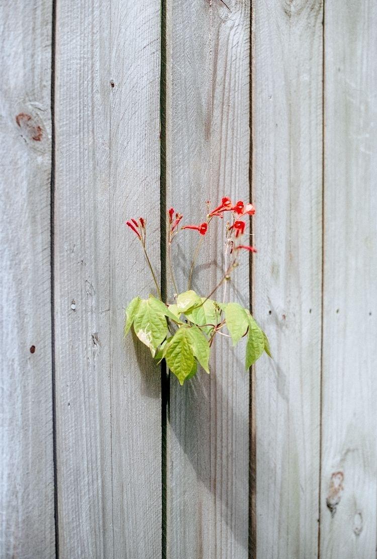 Untitled (Fence Flower Savannah - colinczerwinski   ello