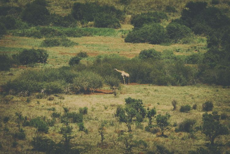sense nature Africa - giraffe, wildlife - christofkessemeier | ello