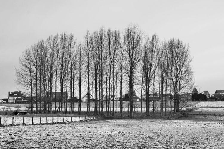 Finally winter Belgium. -7 day  - jdec   ello