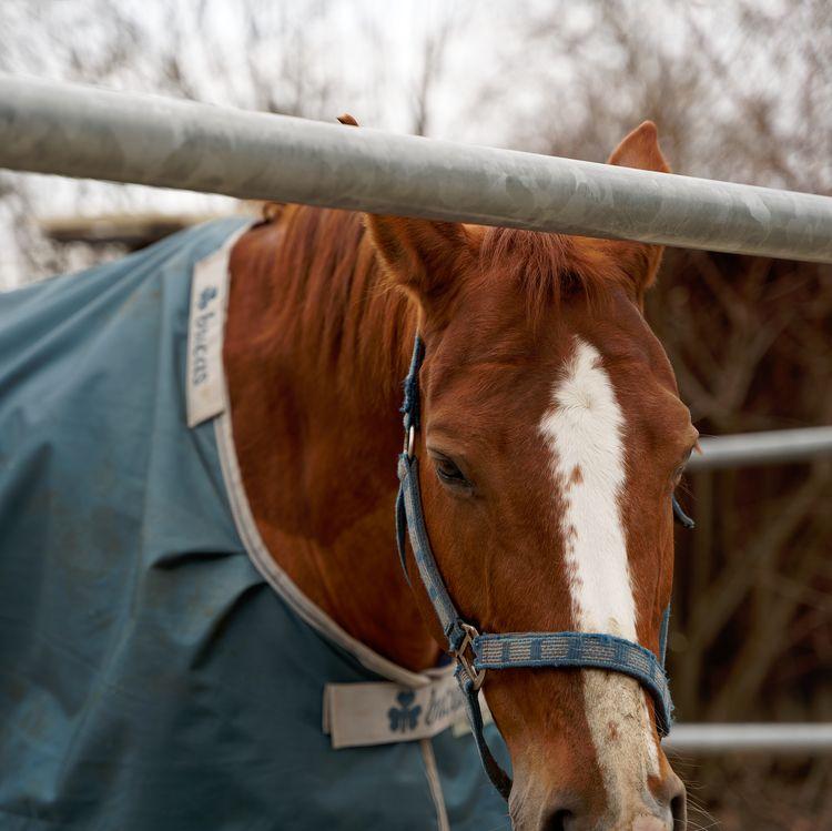 Schöne Tiere, schöne Tiere - photography - marcushammerschmitt | ello