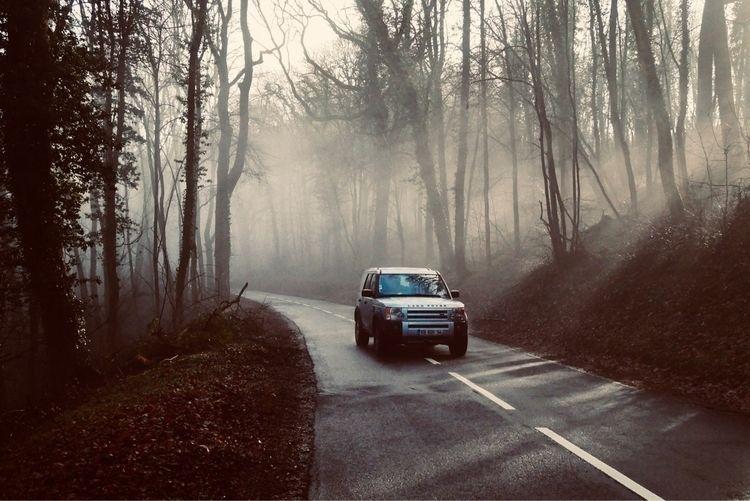 Foggy morning, 19.02.2021 - ivanlich | ello