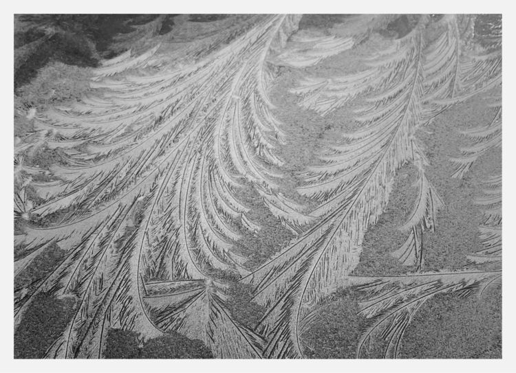 Today morning, Ice Crystals - winter - taari | ello