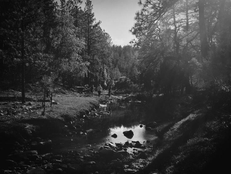 adventure - az, arizona, woods, trees - joelnevius   ello