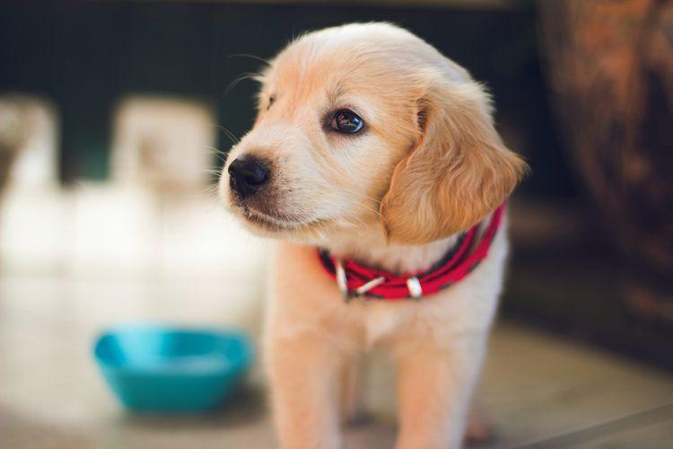 vet online free. sick pet stres - francissmith238 | ello