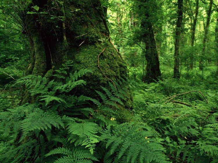 Today International Forest Day - antoniomg   ello