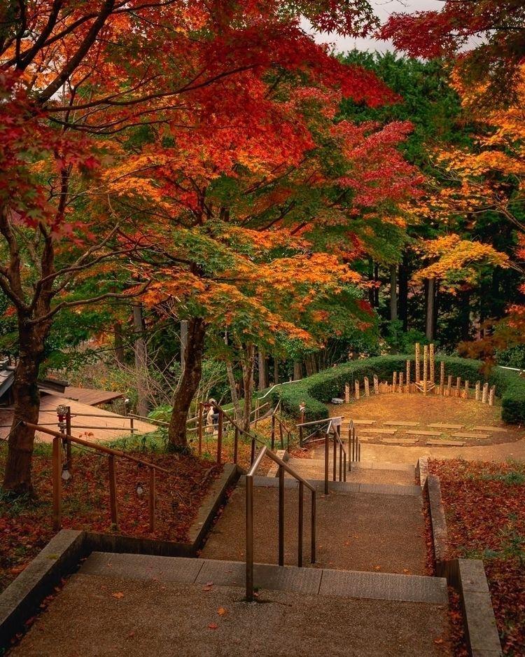 Walking forest...  - tokyo, japan - fokality   ello