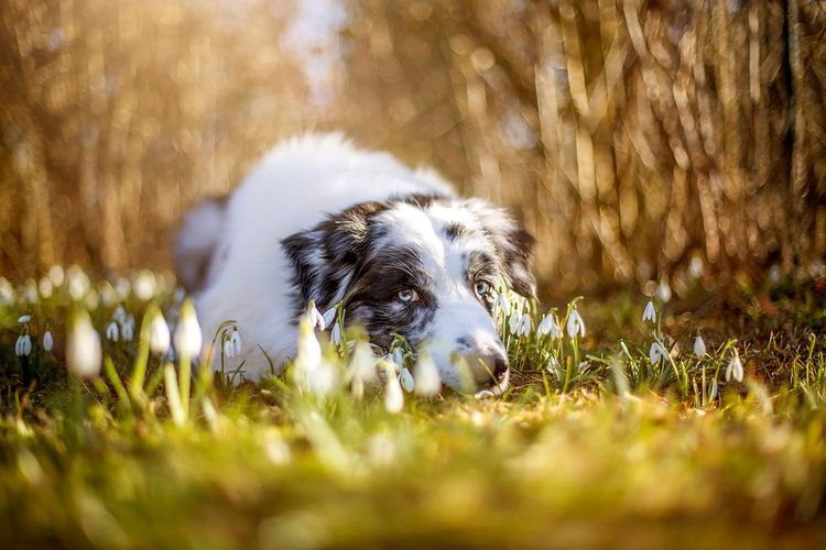 briard, dog, love, baby, photo - funnypet | ello