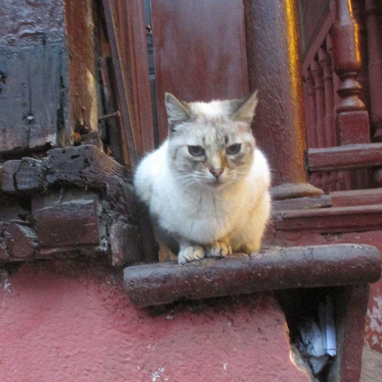 Barranco, Lima, Peru Cat - catoftheday - electrovista   ello