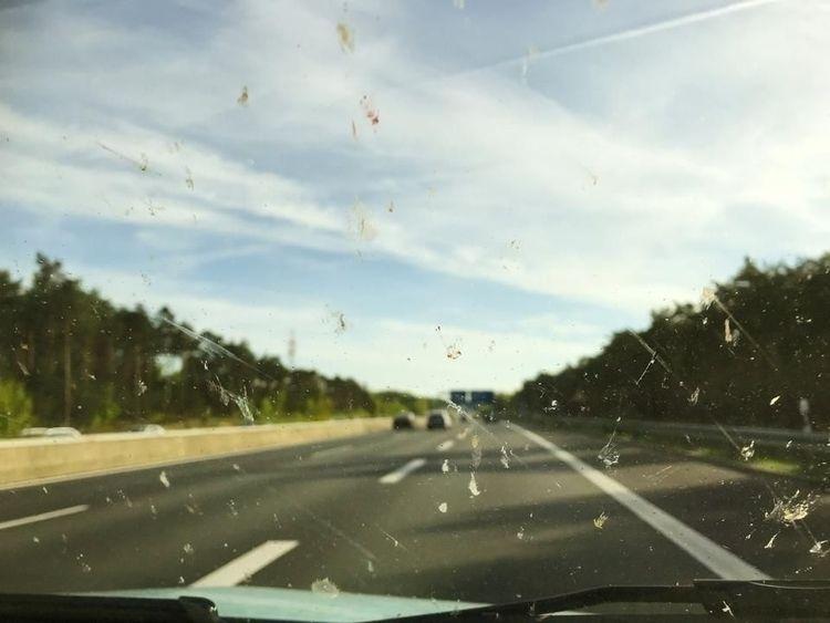 bugs windshield? necessarily go - ccruzme | ello