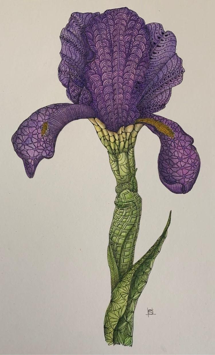 Ceci pas Iris - Colored pencil  - steppielee | ello