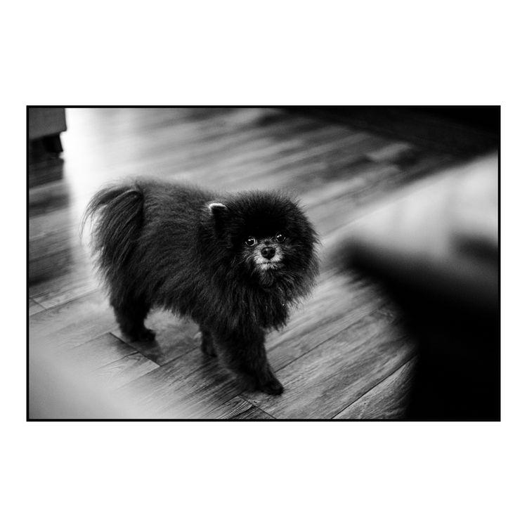 bugger loves 2019. Canon 6D ISO - andrewlodgephoto | ello