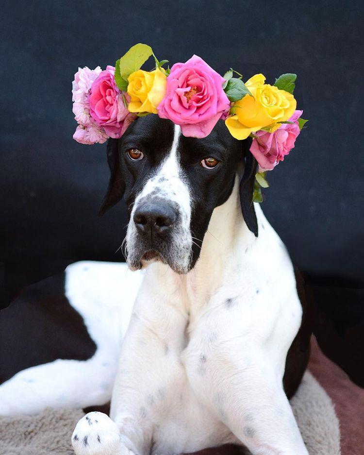 Credit ? Happiness blooms  - dog - pupstime | ello