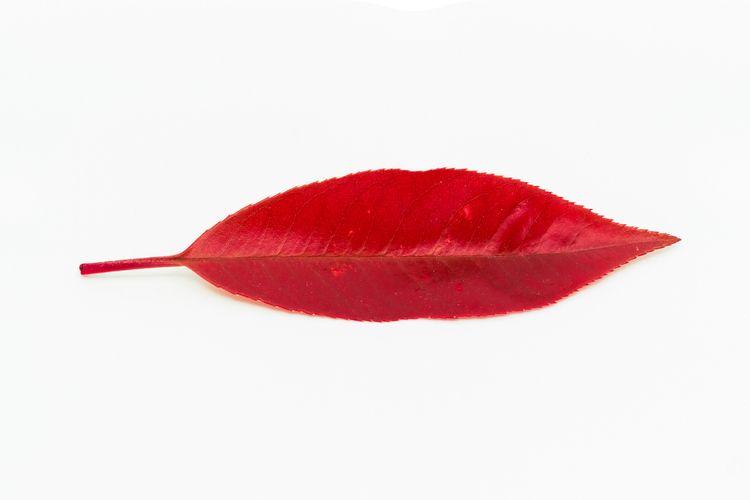 Kiss lips 04/2021 spring, roman - notabene | ello