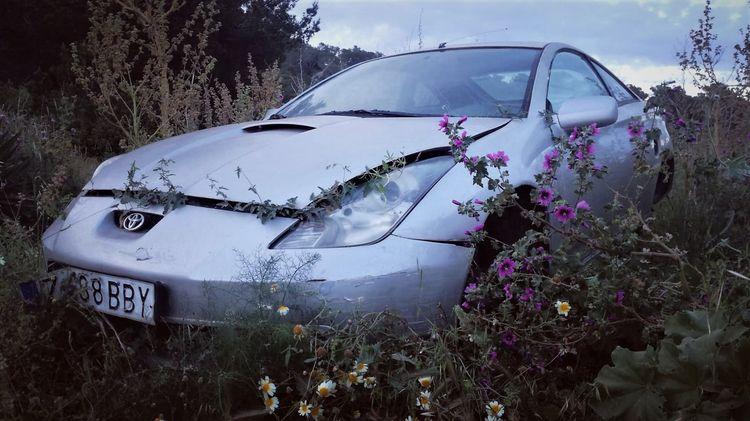 wild - car, nature, flowers, invasion - rastaman0 | ello