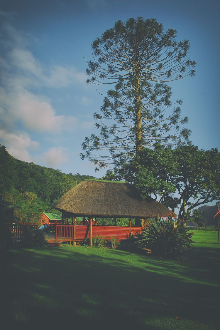 shady place tree St Johns Cape  - christofkessemeier   ello