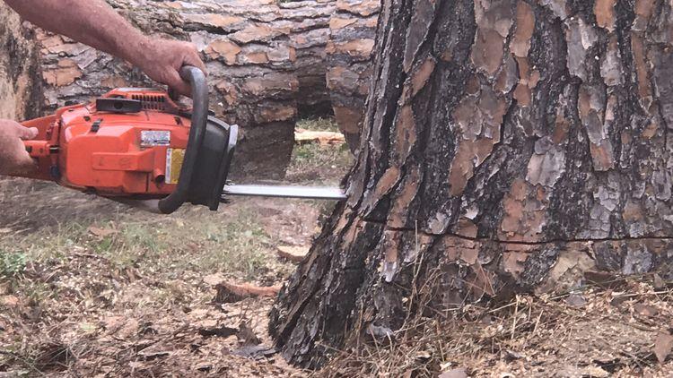 Savannah Georgia Tree Services  - savannahgatreeservices | ello