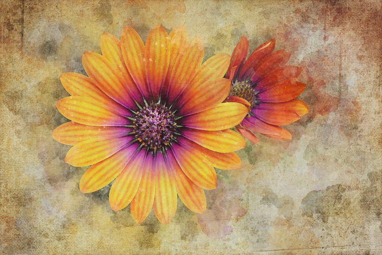 "Daisies ""Daisies, simple sweet - scottnorrisphotography | ello"