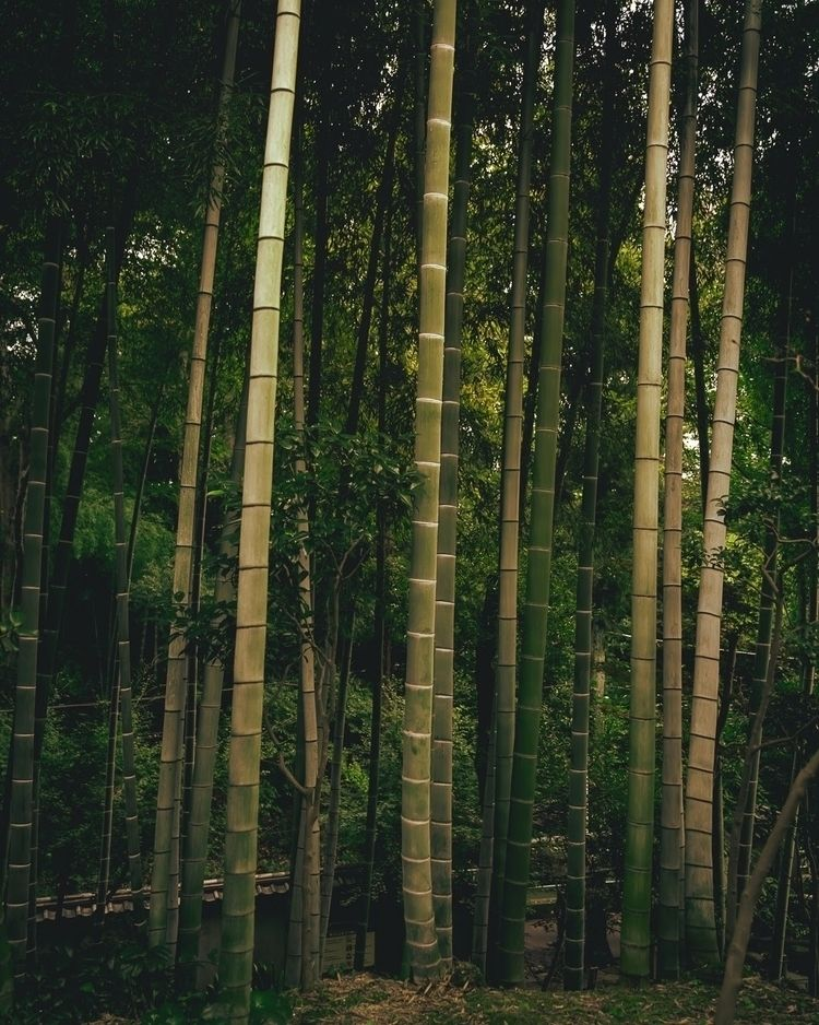 Bamboo forest favorite type...  - fokality | ello