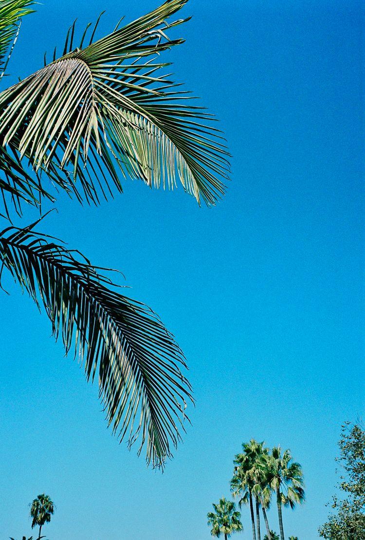 Venice Beach | Portra 400 Leica - street_spirit | ello