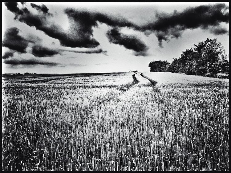 Barley (2021 - phil_levene | ello