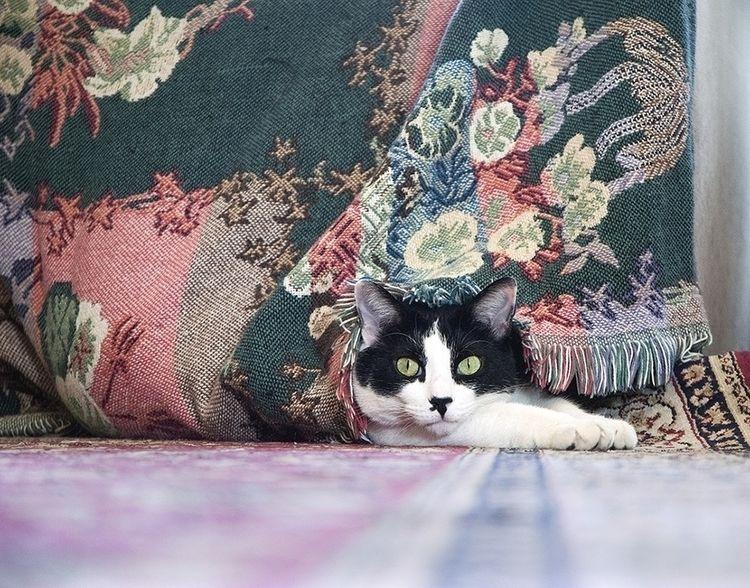 Kitty - photostatguy | ello