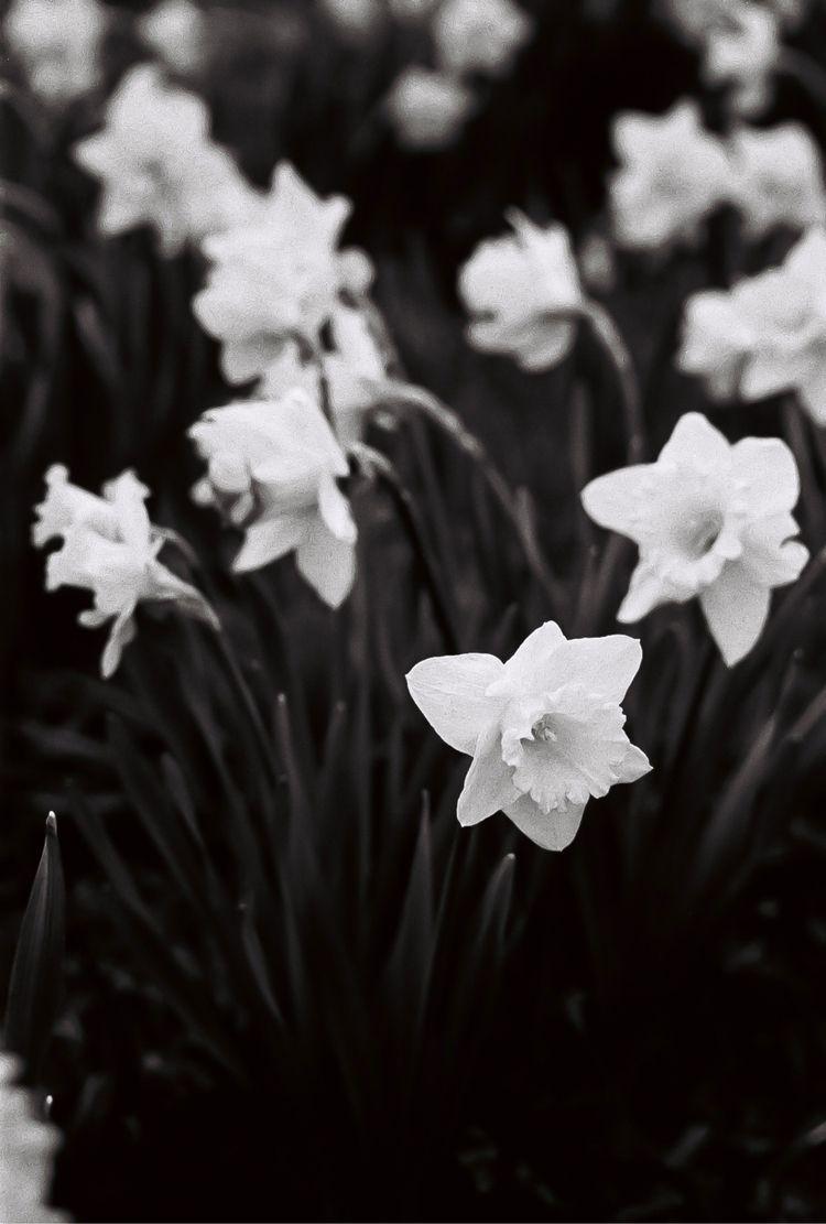 Flowers, 2021 - analog, film, photography - noeangelito   ello