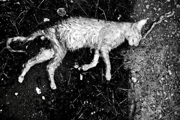 Sad ninth life Feline carcass s - westdocs   ello