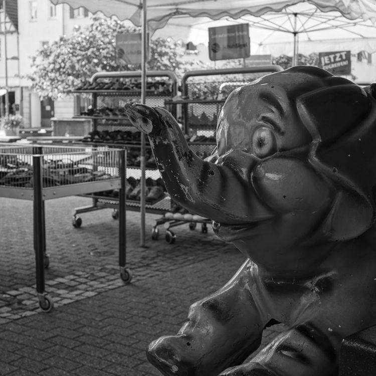 summer hot - photography, elephant - marcushammerschmitt | ello