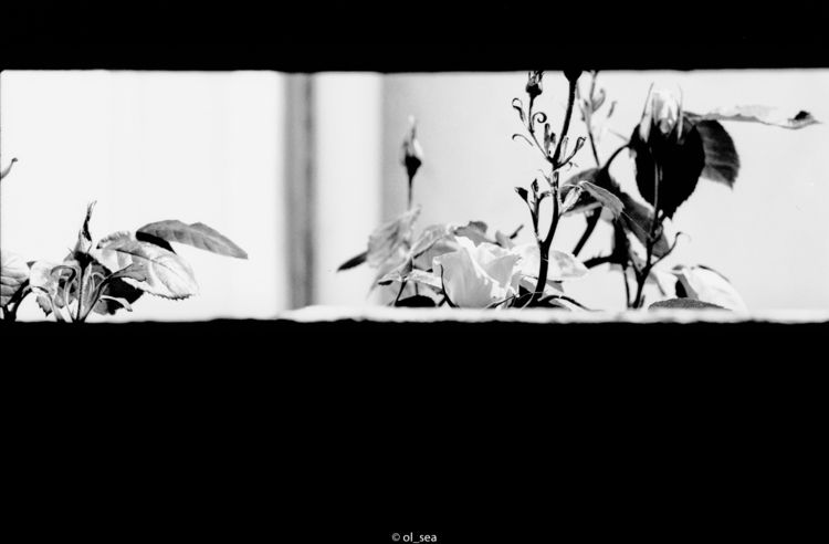 film ferrania p30 - analog, blackwhite - ol_sea | ello