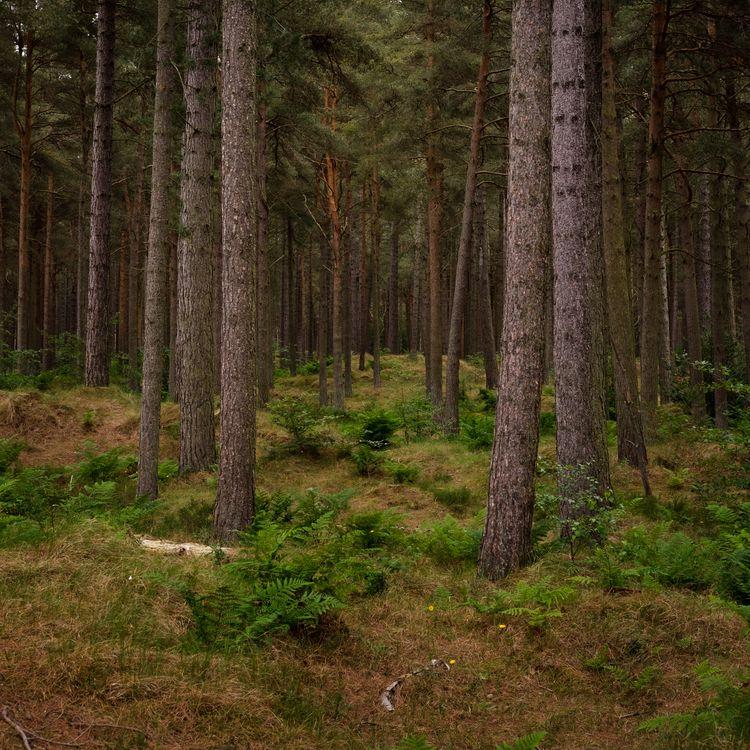 walk forest - andyflack | ello