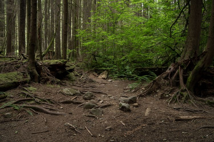 pathway forest - jimroche1   ello