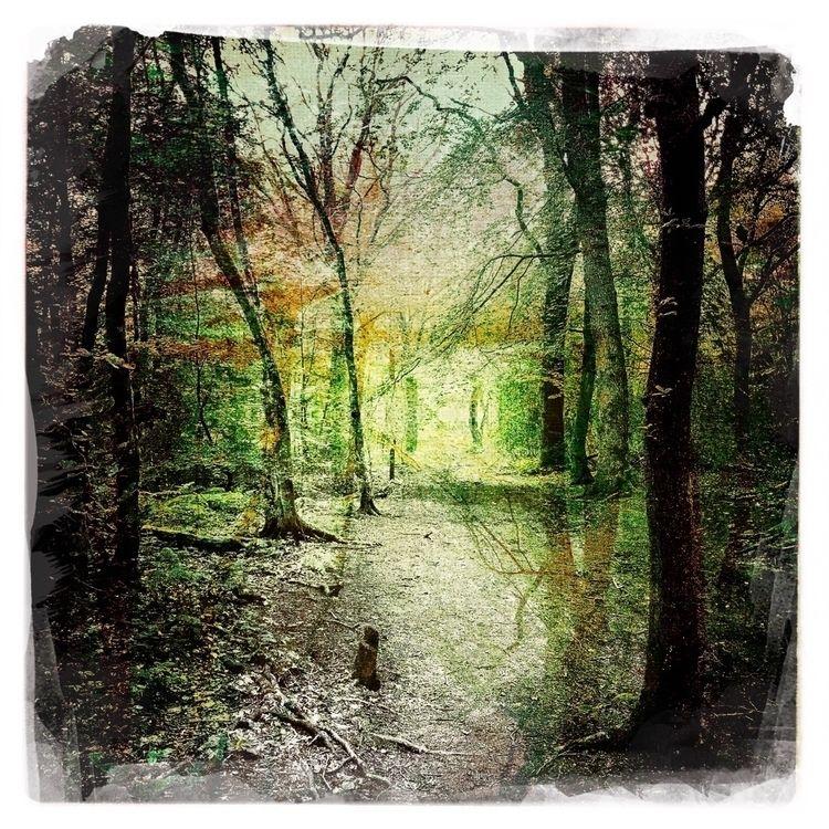 Deep woods - paulgriffiths   ello