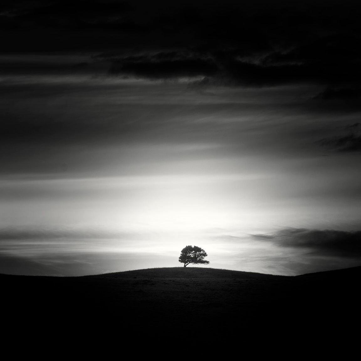 tree hill - nlwirth | ello