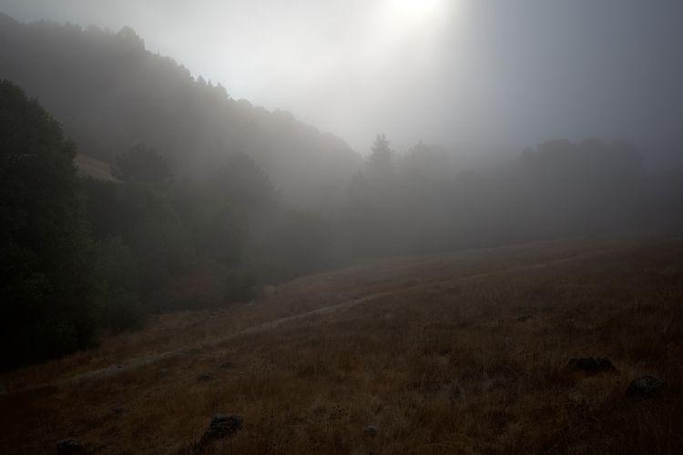 Oakland, CA / July 31, 2021 - mood - biosfear   ello