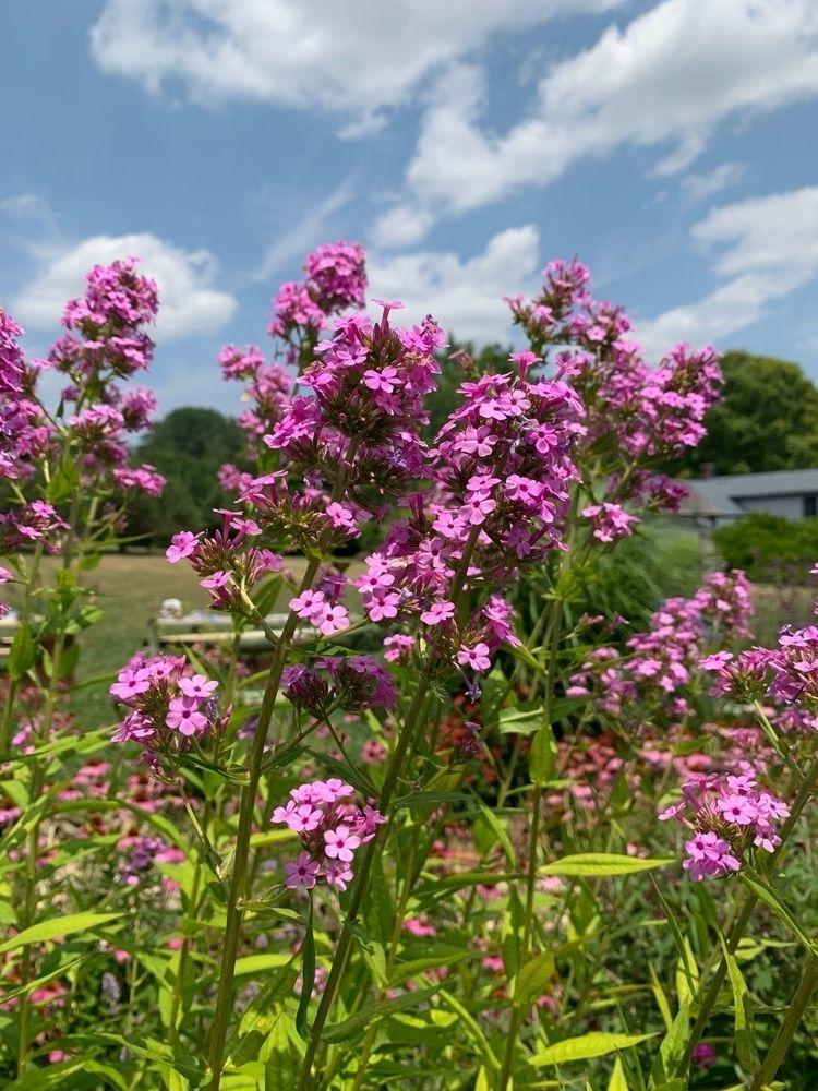 floral, flower, botanical, bloom - depressobean | ello