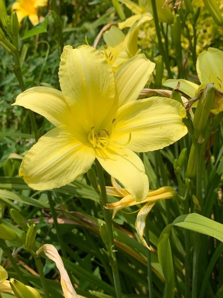 floral, flower, botanical, yellow - depressobean | ello