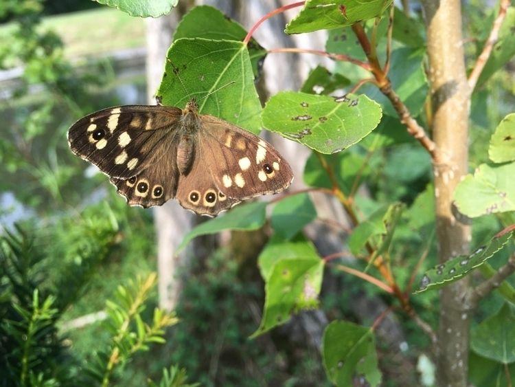 Butterfly - loran_kuijpers | ello