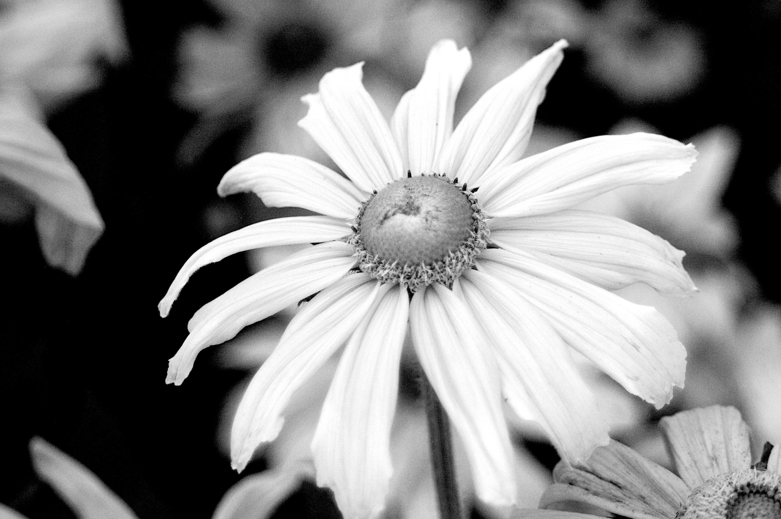 Monochrome Botanical 16 - flowerphotography - dorian-stretton   ello
