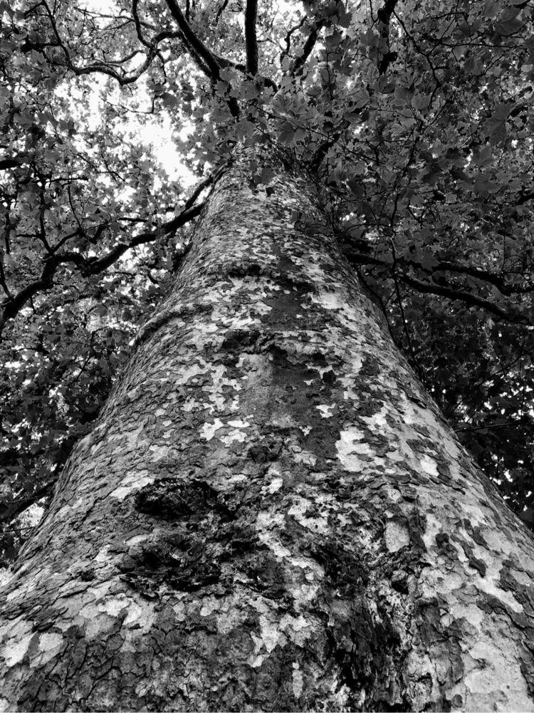 tree - thebiggesttree, france, francia - sarah_adsst | ello