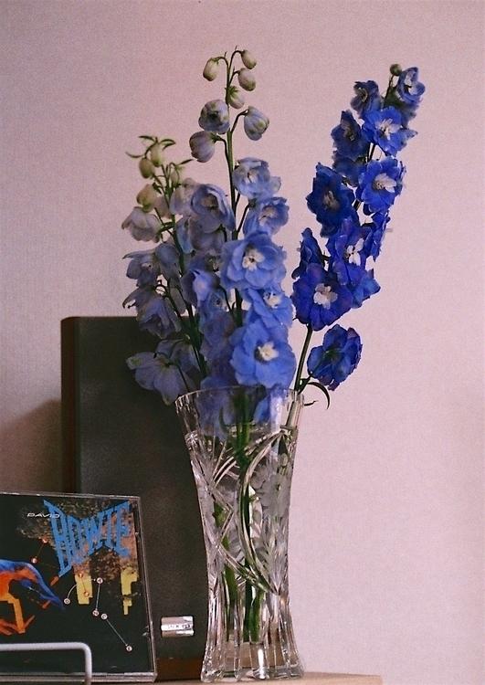 Electric Blue.jpeg